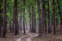 Nationalpark Kanha