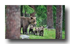 2012 Finnland FIN4290 mother3cubs169 bot