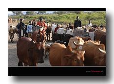 Rinder und Kinder - der Reichtum auf dem Lande