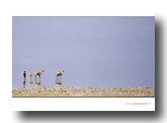 Kameltrieb in der Wüste Danakil
