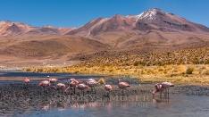Flamingos in der Lagune