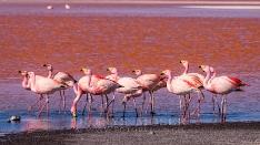 Jackson Flamingos