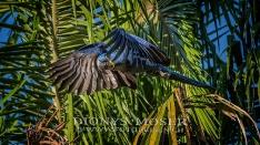 Pantanal 2015_8