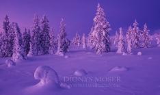 Finnland Wintertraum_11