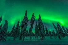 Finnland Wintertraum_15