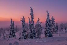 Finnland Wintertraum_1