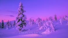 Finnland Wintertraum_21