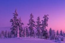 Finnland Wintertraum_6