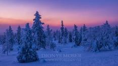 Finnland Wintertraum_8
