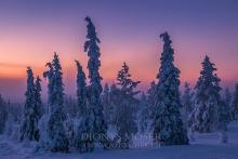 Finnland Wintertraum_9