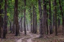 Nationalpark Kanha