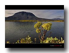 Vulkanlandschaft mit See und Bärlapp