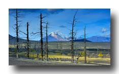 Abgestorbener Wald am Vulkan Tolbatschik