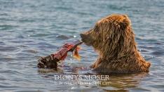 Kamtschatka-Braunbären_10