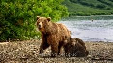 Kamtschatka-Braunbären_11