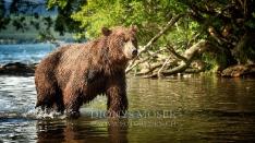 Kamtschatka-Braunbären_16