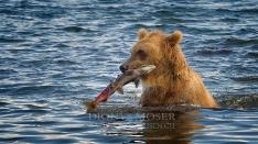 Kamtschatka-Braunbären_18