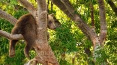 Kamtschatka-Braunbären_19