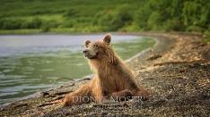 Kamtschatka-Braunbären_21