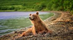 Kamtschatka-Braunbären_22