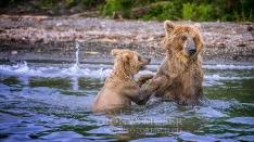 Kamtschatka-Braunbären_7