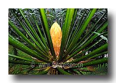 Junge Palme