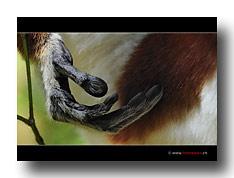 Lemurenhand