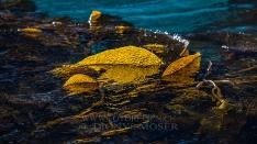 Kelp, South Georgia