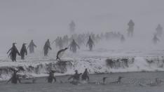 Pinguine im Blizzard