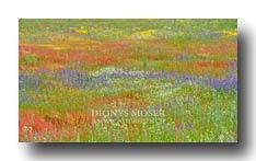 Farbige Magerwiesen