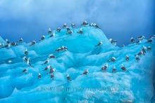 Kittiwak-Möven auf blauem Eisberg