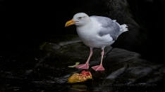Vogel friss oder stirb