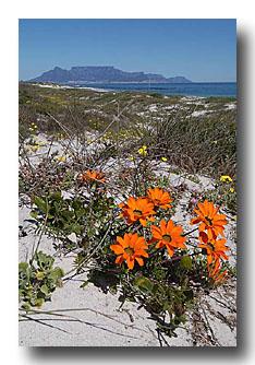 Tafelberg capet