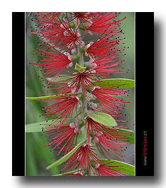Uganda Pflanzen